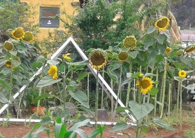 girasoles web 26